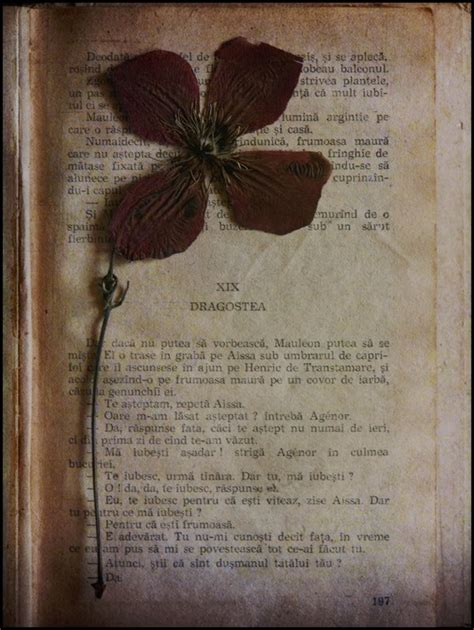 dead roses books dead flowers and books by migrena on deviantart