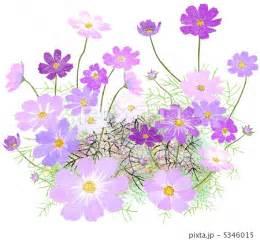 秋の花 イラスト フリー google 検索 秋の花 pinterest
