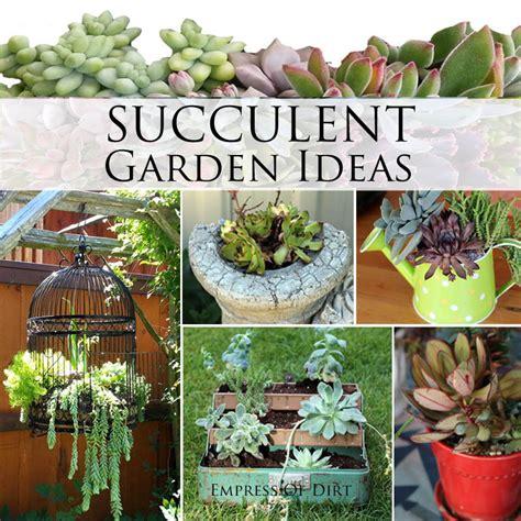Succulents Garden Ideas Succulent Garden Ideas Ebay