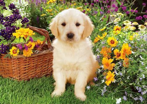 chien garden