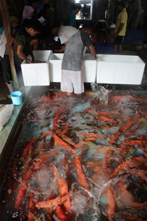 Pancing Makassar kisah dua ikan pancing sianida dan para bos asing di