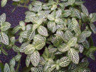 plants   strangest people houseplant toxicity week