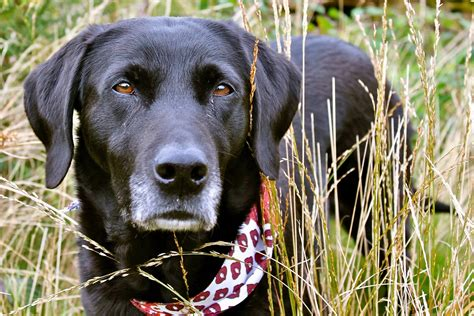 do dogs get fevers can dogs get hay fever or why else might a pete the vet