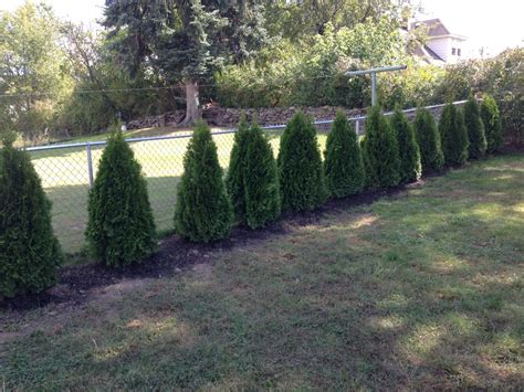 privacy fence trees ideas fence ideas fence ideas