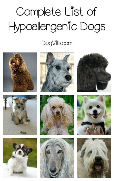 list of dogs complete list of hypoallergenic breeds