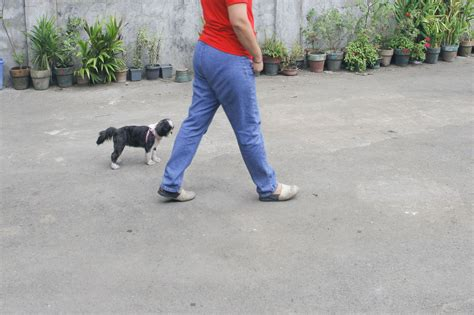 how to your to go leash how to prepare your to go leash 4 steps