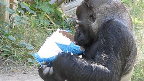 koko sopal nizam v 2 ndume celebrates koko s birthday july 4 2015