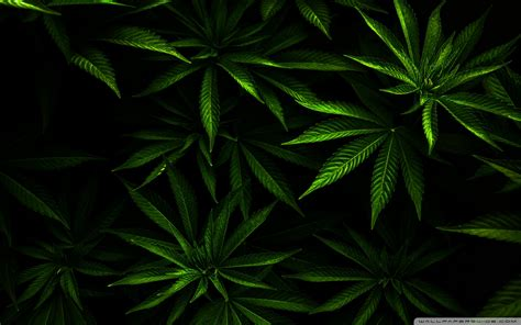 weed wallpaper pinterest pin trippy weed leaf wallpaper on pinterest