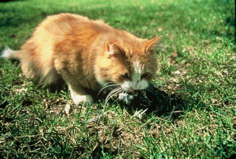 cat in backyard backyard bird safety backyard bird lover