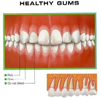healthy gums vitamins for healthy gums health benefits of vitamins for healthy gums find home