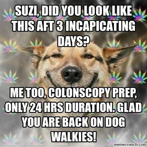 Stoner Dog Meme - stoner dog meme memes