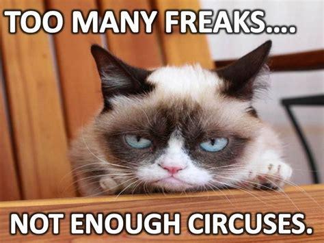 Meme Grumpy Cat - 162 best grumpy cat images on pinterest funny stuff