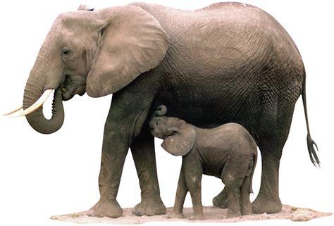 Sis Elephant Top Bigsize elephants