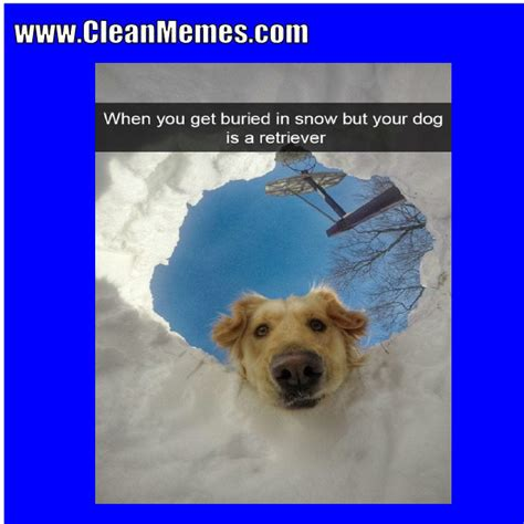 Clean Animal Memes - clean animal memes just fun stuff page 32 myfitnesspal com