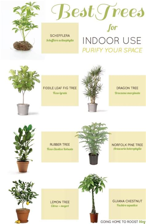 decorative trees for the home best 25 indoor trees ideas on best indoor trees indoor tree plants and fig tree