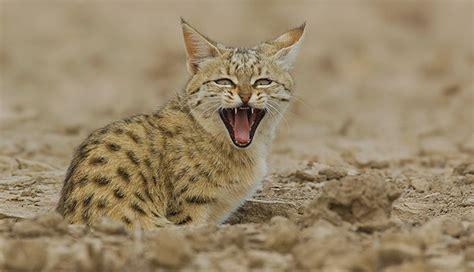 thar desert animals 7 wild animals of the great thar desert of india