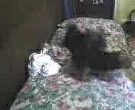 baby fell off the bed my baby yorkshire dog fell off the bed hilarious youtube