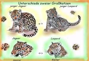 What Is The Difference Between Jaguar And Leopard Difference Between Leopard And Jaguar Car Interior Design
