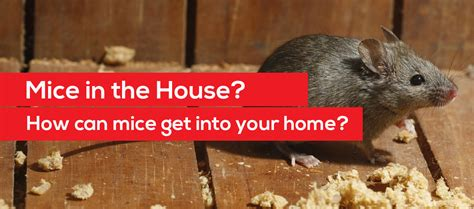 how do mice get in house how do mice get in house 28 images how to get rid of mice top 10 home remedies