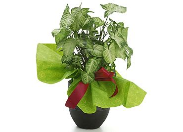 fresh beautiful indoor plant ideas for eco friendly 23201 eco friendly and healthy gift ideas at shopping links