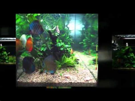 membuat aquascape ikan membuat aquascape untuk discus youtube