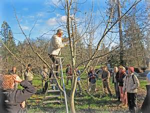 fruit tree pruning for dummies diagram for pruning fruit trees diagram for fermentation