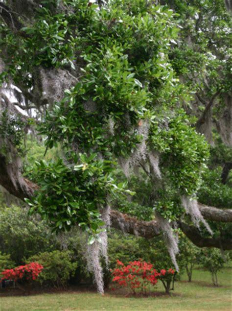 Olive Garden Charleston by Charleston Sc Gardens Historic Gardens Of Charleston