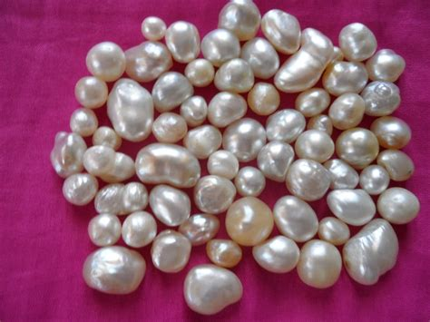cultured pearl pearls of pinctada maxima cultured pearls