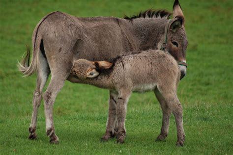 alimentazione asini quando gli asini aiutano i bambini dott gianfranco