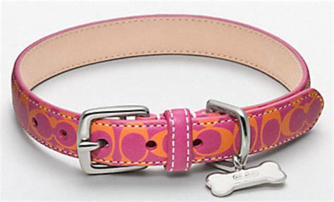 coach collars irresistible finds coach for pets irresistible pets