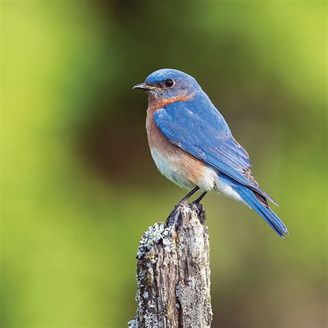 how to build bluebird houses how to build a bluebird house diy mother earth news