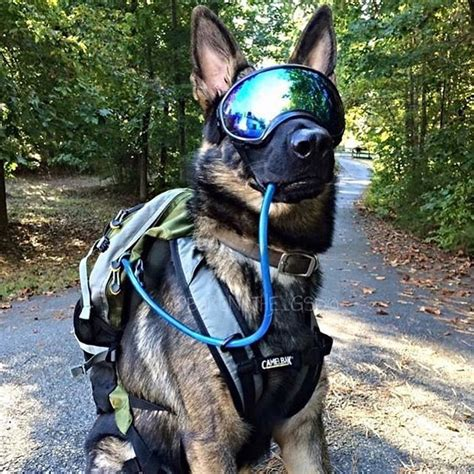 goggles for dogs goggles
