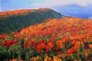 door county fall colors the domestic curator are you a leaf peeper