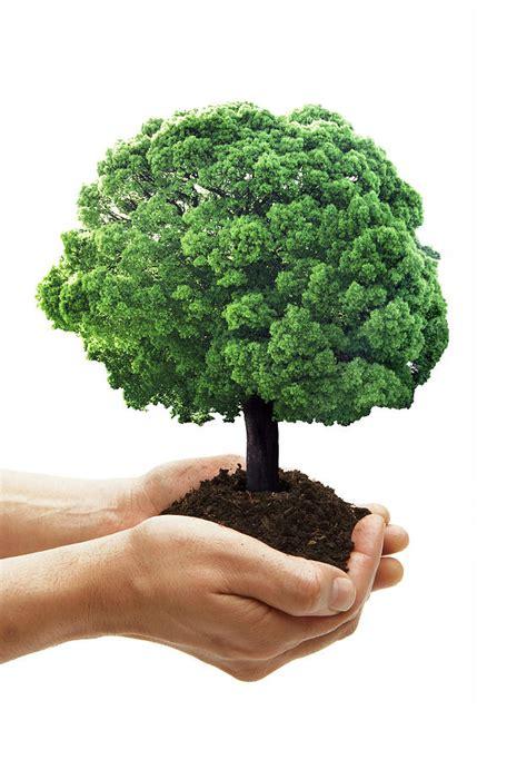 grow tree growing trees with cinema4d advice needed cinema4d