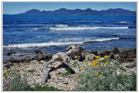 immagini paesaggi fioriti punta drago foto immagini paesaggi mare