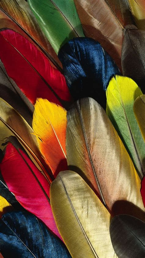 Jelly Rabbit Deer Flower Iphone 5 6 6 Plus7 7 Plus colorful parrot feathers iphone 6 wallpaper hd free
