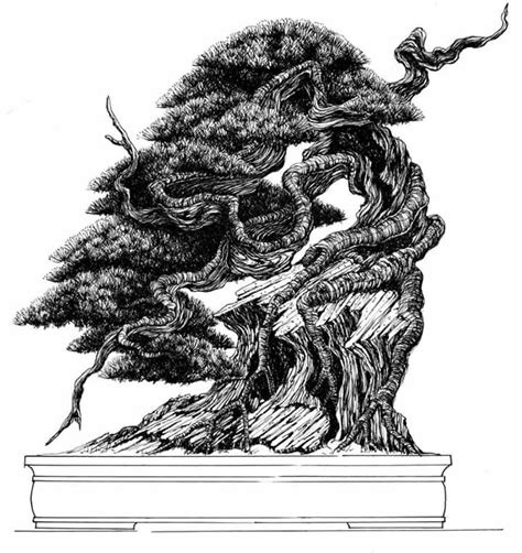 libro bonsai the art of 66 best images about bonsai drawing on bonsai