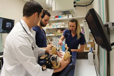 Komik Second Animal Doctor course aims to supplement veterinary students primary care skills 187 college of veterinary