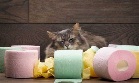 how to treat kitten diarrhea at home cat
