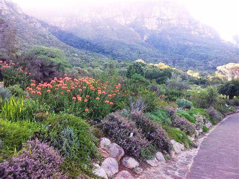 File Kirstenbosch Botanical Garden Fynbos Cape Town Botanical Garden Openings