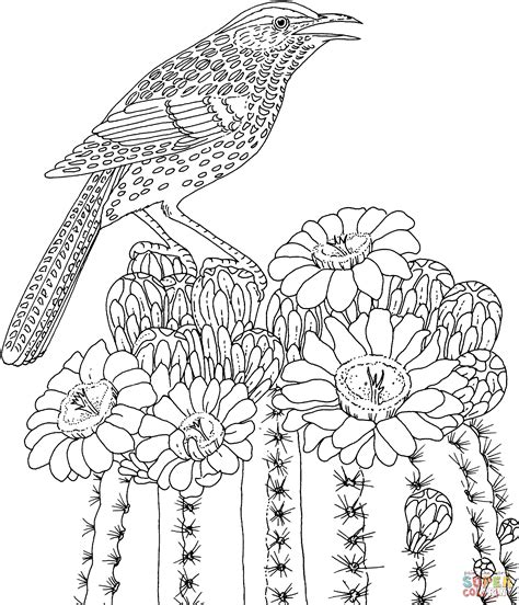 coloring pages of state birds and flowers cactus wren and saguaro blossom arizona state bird and