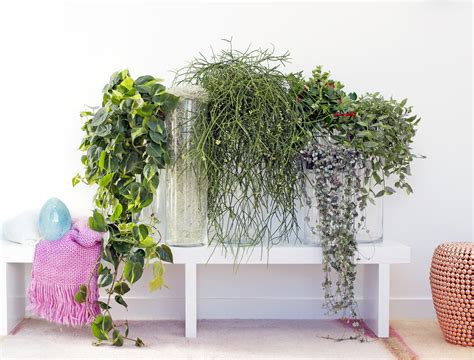 Supérieur Plantes D Interieur Retombantes #7: 09-2016-05_0.jpg