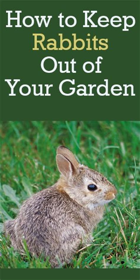 how to keep rabbits out of your garden rabbit resistant plants rabbit plants and gardens