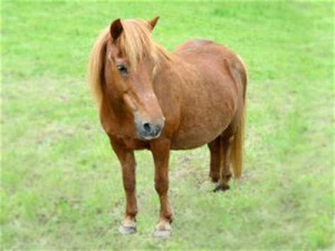pferd eindecken ab wann wie viel wiegt ein pferd verschiedene beispiele
