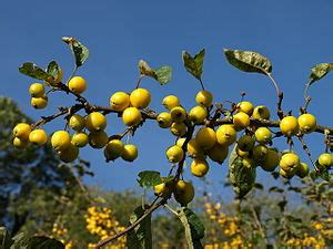 fruit trees for sale wisconsin trym tales fruit trees for sale