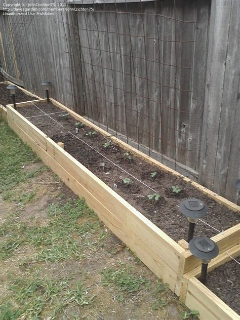 raised garden bed with fence high yield gardening johncrichton75 picture raised bed
