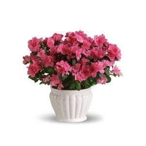 il colore dei fiori il colore dei fiori invio fiori on line vendita e