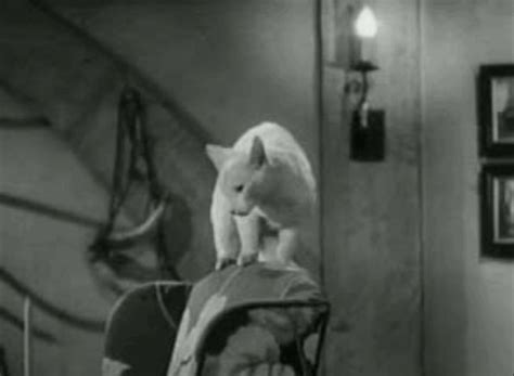 cat on chair gif the invisible 1940 cinema cats