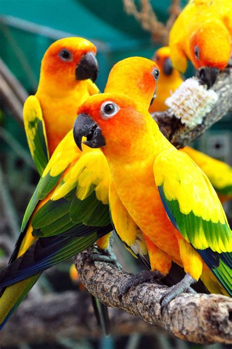 1000 images about cotorras loros pericos parrots on