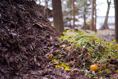 backyard compost pile scrap that smell 5 tips for a pleasant backyard compost pile